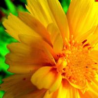 Mari's trademark yellow flower.