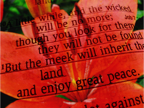 ...the meek will inherit the land and enjoy great peace.