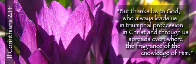 II Corinthians 2:14 with purple crocuses in the sun